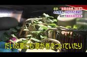 テレビ写真49